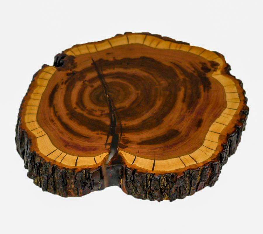 Baumscheibe in Zwetschke mit Rinde, Risse mit transparentem Epoxidharz ausgegossen und anschließend matt lackiert